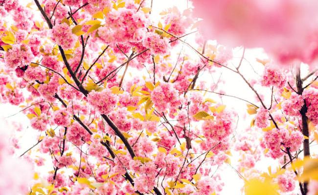 Slider - Flower